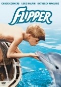 Flipper - wallpapers.