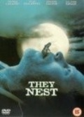 They Nest - wallpapers.