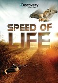 Speed of Life - wallpapers.