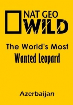 The World's Most Wanted Leopard (Azerbaijan) pictures.