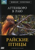 Attenborough in Paradise - wallpapers.