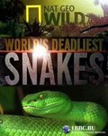 N.G: World's deadliest snakes pictures.