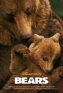 Bears - wallpapers.