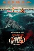 Jersey Shore Shark Attack - wallpapers.